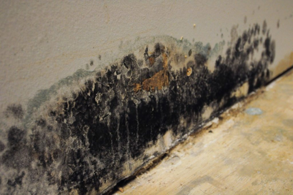 Dangers of Living in a House with Mold