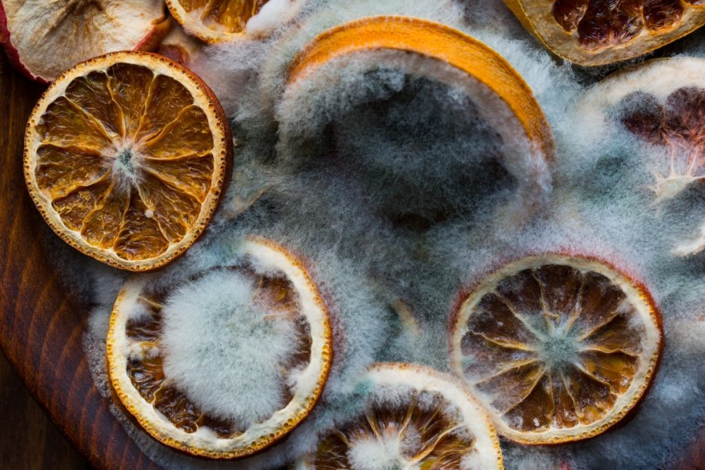 Mold in Oranges
