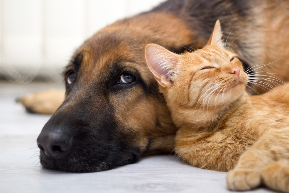 Mold and Your Pets