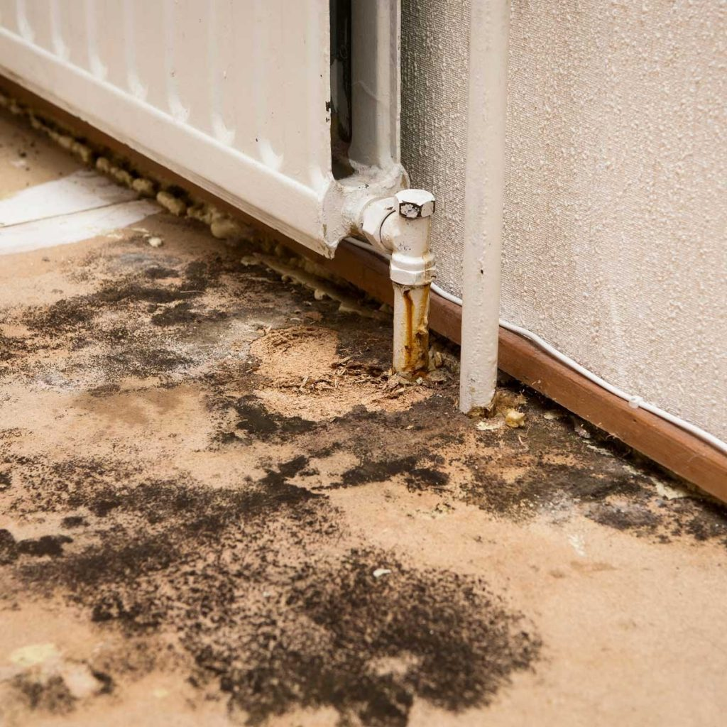 Respiratory Problems Caused by Mold