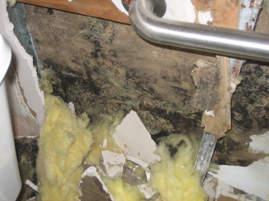 Mold Damage in Schools