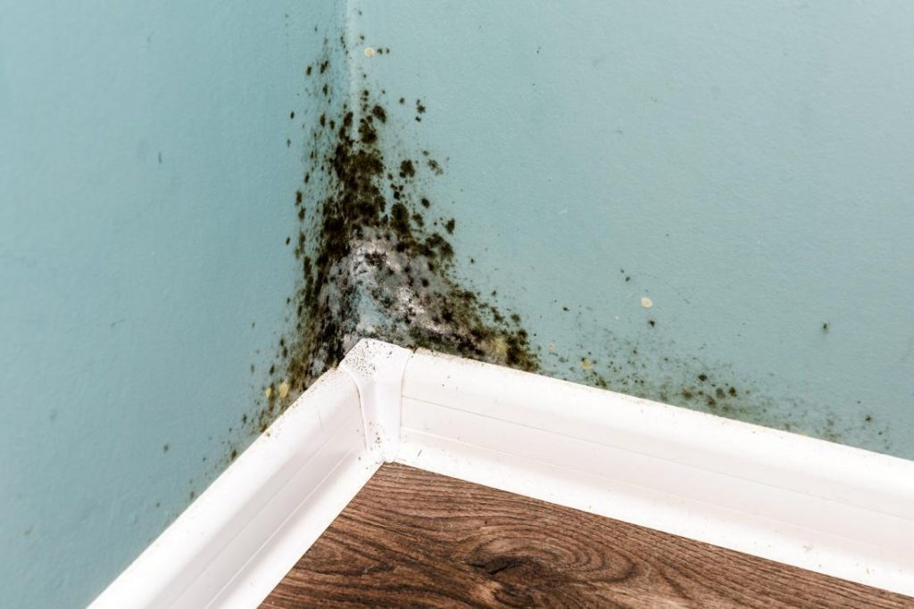 Mold Health Issues and the Dangers Behind.